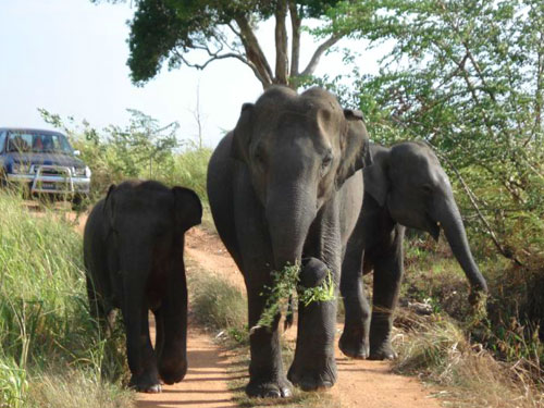 wilpattu-national-park