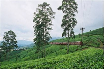 Ceylon Tea Plantation. Central Highlands.