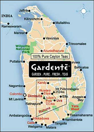 Black Tea Ceylon Tea Map Sri Lanka Hotel Guide - Map of teas