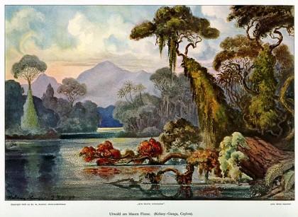Sri Lanka Holidays Jungle River