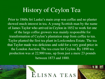 Ceylon Tea From Sri Lanka